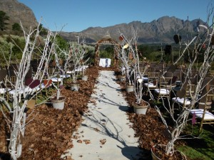 Dieu Donne Estate in Franschoek